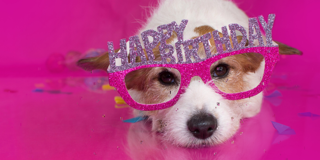 5 Great Ways to Celebrate a Pet's Birthday